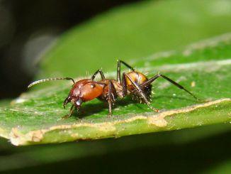 3D打印蚁巢,给蚁后一个绿色的家