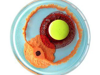 一组生物创客在培养皿中创作的彩绘