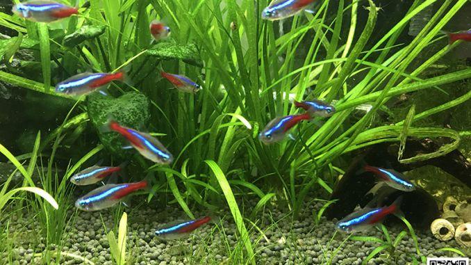 共享自然水族馆:养一缸鱼竟可以如此省心