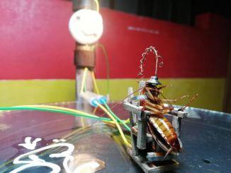 蟑螂闯入家中,他怒制电椅通电上刑